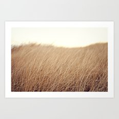 Golden Field Art Print