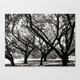 Trees of Harajuku Canvas Print