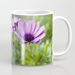 Osteospermum in Purple Coffee Mug