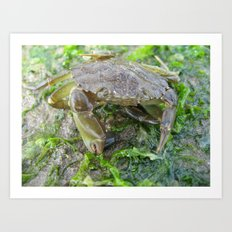 Crab and seaweed on the beach Art Print
