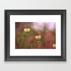 Queen Annes Lace In The Field Framed Art Print