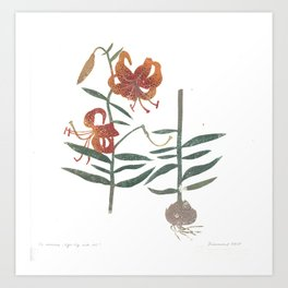 tiger lily with root Art Print