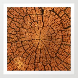 Cross section of old tree trunk I Art Print