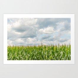 Corn field Art Print