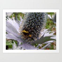 Prickly Pollen Art Print