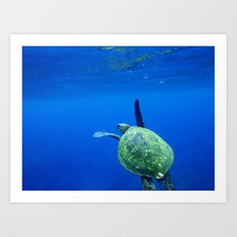 Turtle of the Sea Art Print