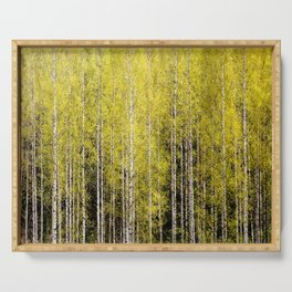 Lovely spring atmosphere - vibrant green leaves on the trees - beautiful birch grove Serving Tray