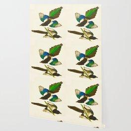 American Magpie Hand Drawn Illustrations Vintage Scientific Art John James Audubon Birds Wallpaper