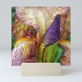 Iris With Raindrops Mini Art Print
