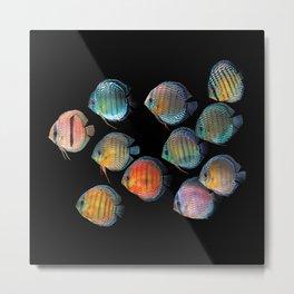 Wild discus fish Metal Print