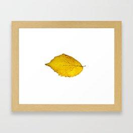 Leaf Isolated Framed Art Print