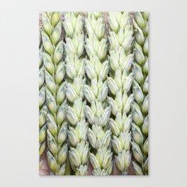 wheat ears Canvas Print