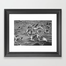 Larus #4 Framed Art Print