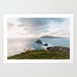 irish sheep I Art Print