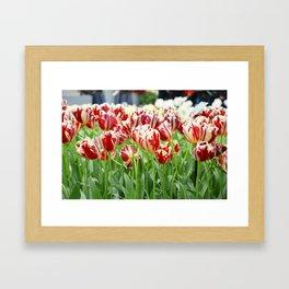 Striped tulips Framed Art Print