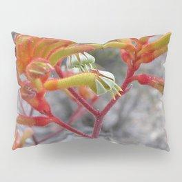 Orange Kangaroo Paw Flowers Pillow Sham