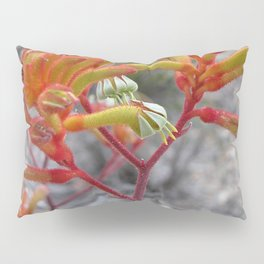 Orange Kangaroo Paw Flowers Pillow Sham