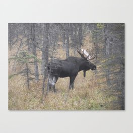 Moose on the Murray Canvas Print