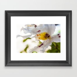 Orchid White Framed Art Print