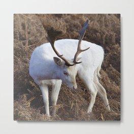Albino deer Metal Print
