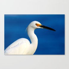 Look into the bird's eye Canvas Print