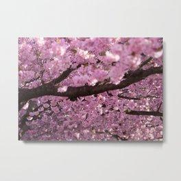 Cherry Blossom Tree Panorama Metal Print