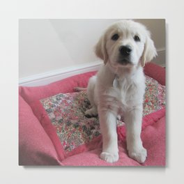 Golden Retriever Puppy on a Patchwork Bed Metal Print