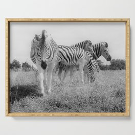 Grazing Zebras Serving Tray