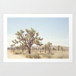 Joshua Tree Cactus - Desert Landscape Photography Art Print