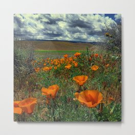 Poppies and Clouds Metal Print