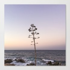 portrait of a tree no.1  Canvas Print