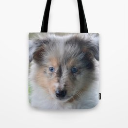 Blue-eyed Portrait of a Shetland Sheepdog Puppy Tote Bag
