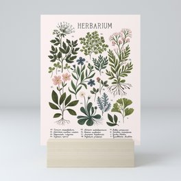 Herbarium ~ vintage inspired botanical art print ~ white Mini Art Print