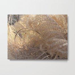 Feather Grass Metal Print