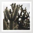 Cactus_0007 by coyotecactuscreative