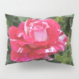 "A Rose Named ""Neil Diamond"" Pillow Sham"