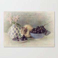 Snoozy loves grapes Canvas Print