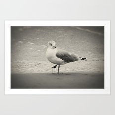 Beach Bird Art Print