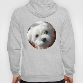 Cute Maltese asking for a treat Hoody