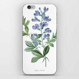 HIGHEST QUALITY botanical poster of Baptisia Australis iPhone Skin