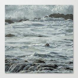 Harbor Seal, No. 1 Canvas Print