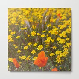 Patches of Gold Metal Print