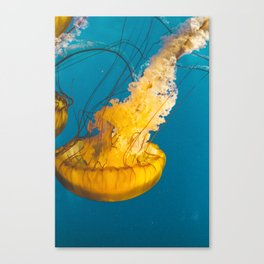 Pacific Sea Nettle Jellyfish III Canvas Print