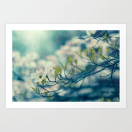 Dogwood Blossom Art Print