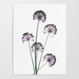 Pink flowers . wallpaper , flower decor, printable art Poster