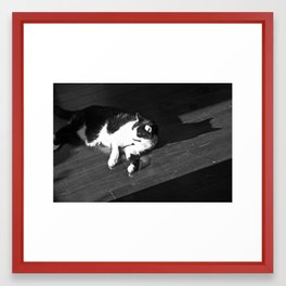 Relaxing Cat Framed Art Print