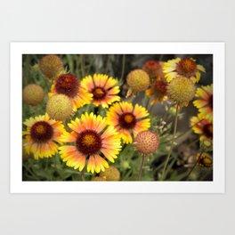 Blanket Flowers Art Print