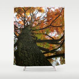 Tree in Amsterdam Shower Curtain