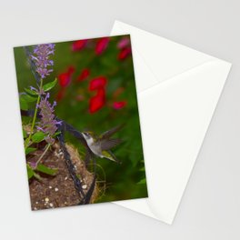 Hanging basket hummingbird with bee balm 52 Stationery Cards
