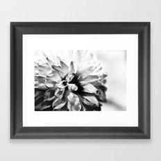 Dahlias 3 Framed Art Print